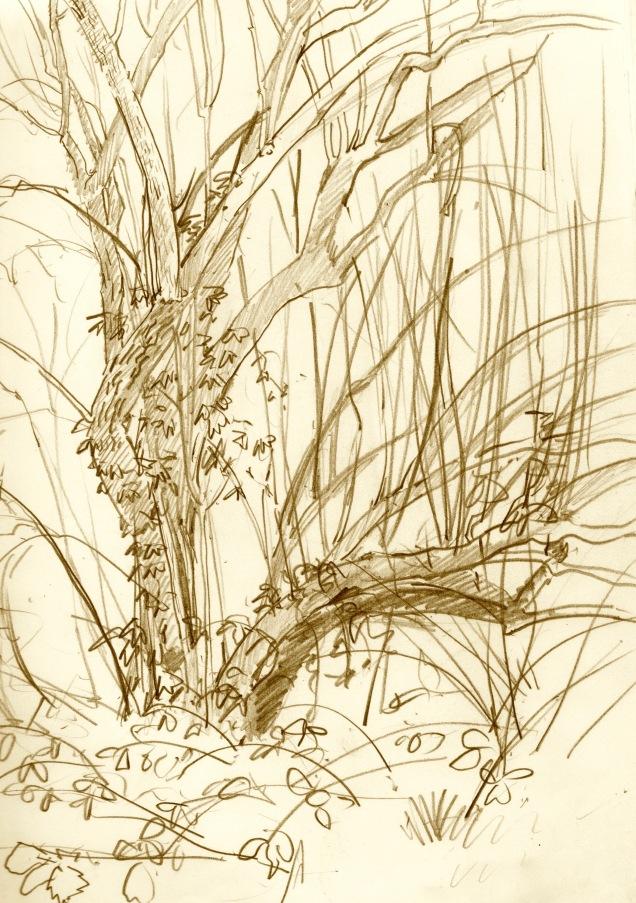sepia-elderflower