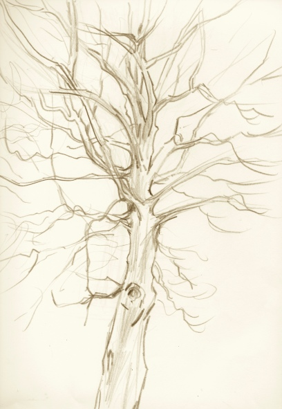 beech-tree-sketch